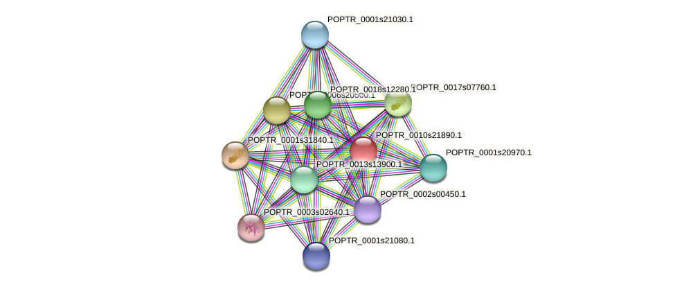 POPTR_0010s21890.1 protein (Populus trichocarpa) - STRING interaction network