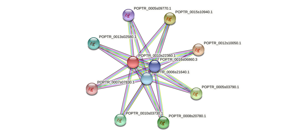 POPTR_0010s22360.1 protein (Populus trichocarpa) - STRING interaction network