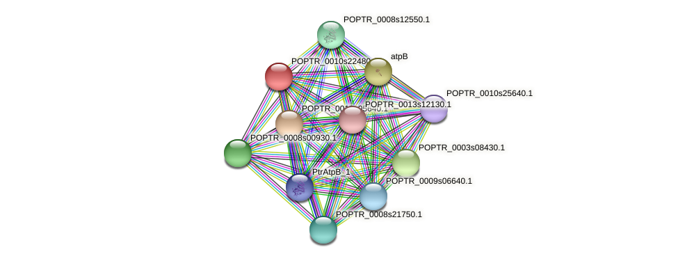 POPTR_0010s22480.1 protein (Populus trichocarpa) - STRING interaction network