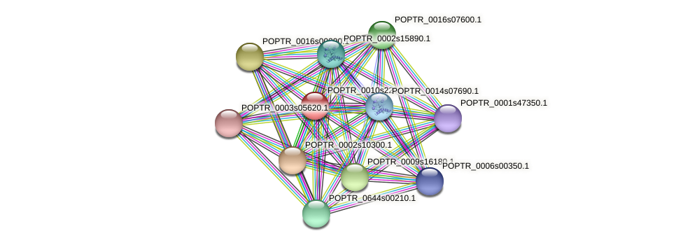 POPTR_0010s22960.1 protein (Populus trichocarpa) - STRING interaction network