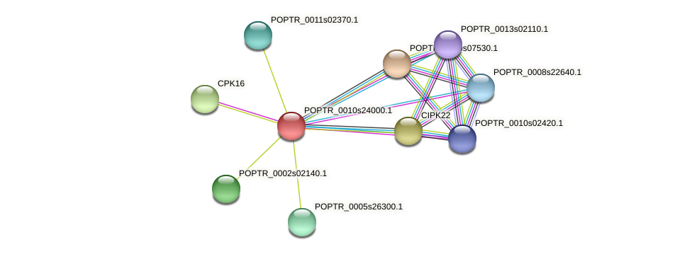 POPTR_0010s24000.1 protein (Populus trichocarpa) - STRING interaction network