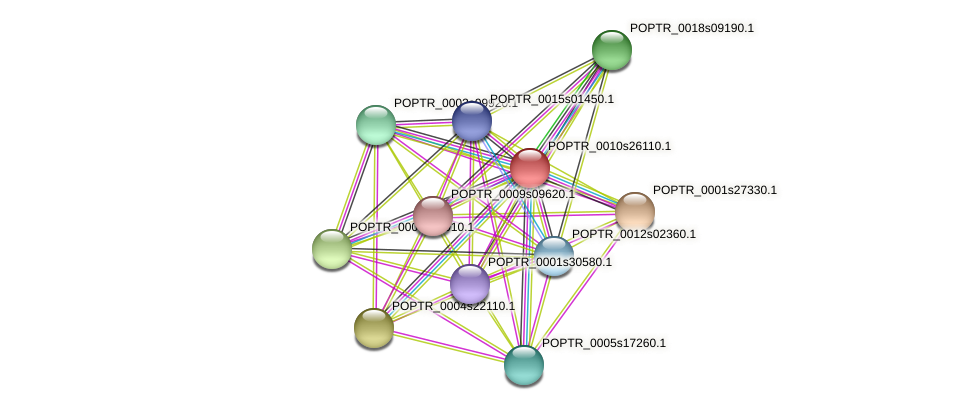 POPTR_0010s26110.1 protein (Populus trichocarpa) - STRING interaction network