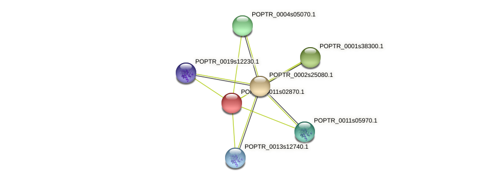 POPTR_0011s02870.1 protein (Populus trichocarpa) - STRING interaction network