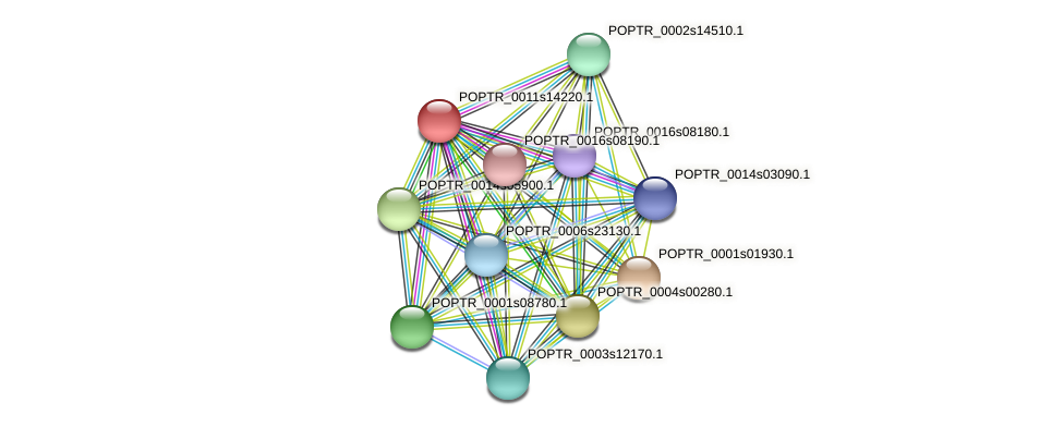 POPTR_0011s14220.1 protein (Populus trichocarpa) - STRING interaction network
