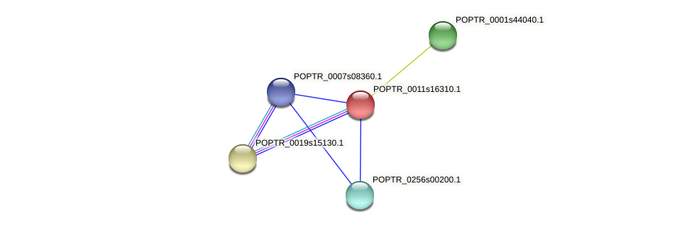 POPTR_0011s16310.1 protein (Populus trichocarpa) - STRING interaction network