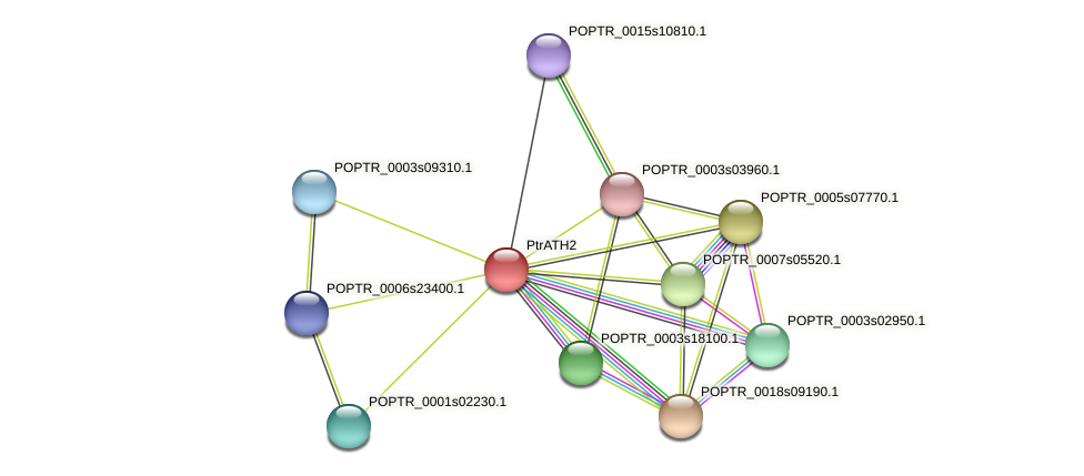 POPTR_0012s07160.1 protein (Populus trichocarpa) - STRING interaction network