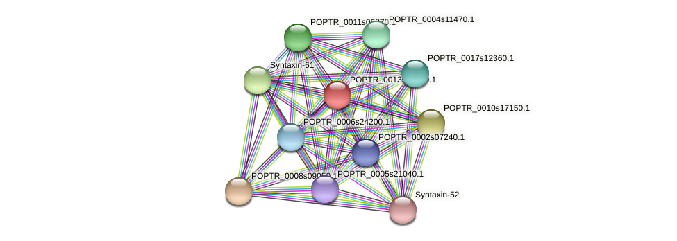 POPTR_0013s01240.1 protein (Populus trichocarpa) - STRING interaction network
