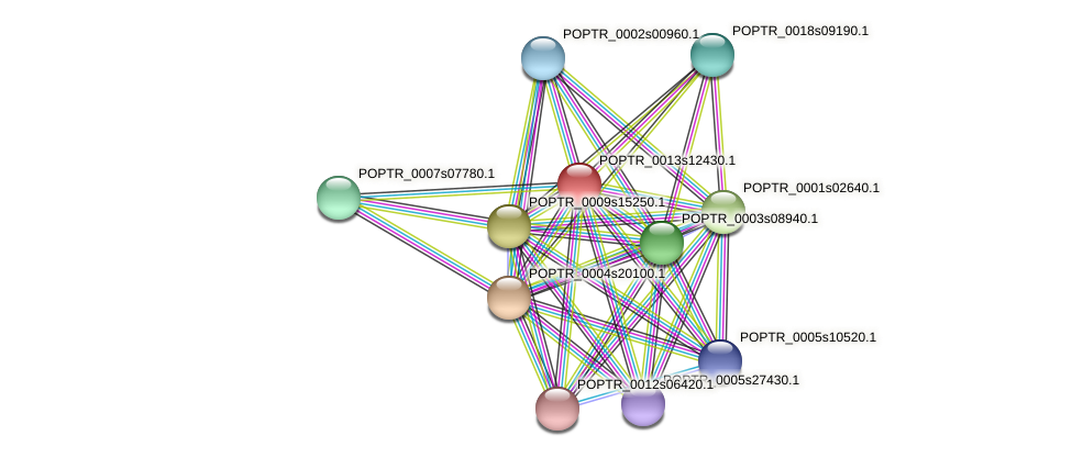 POPTR_0013s12430.1 protein (Populus trichocarpa) - STRING interaction network