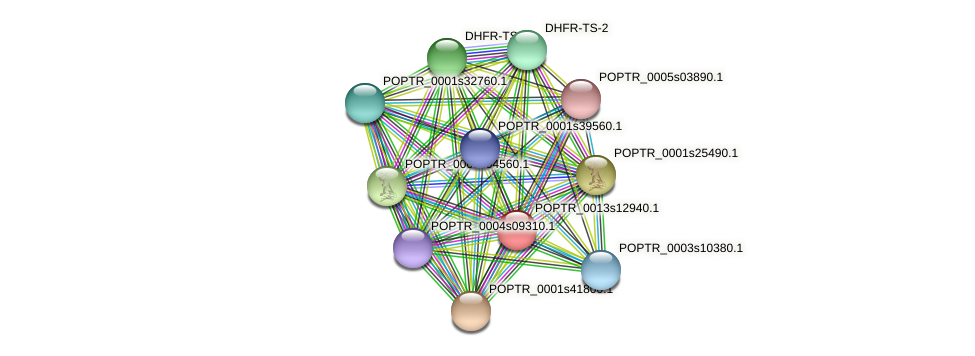 POPTR_0013s12940.1 protein (Populus trichocarpa) - STRING interaction network