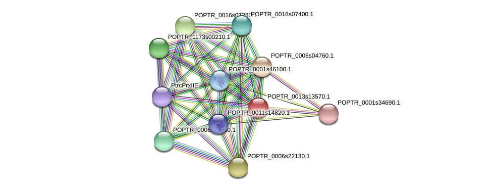 POPTR_0013s13570.1 protein (Populus trichocarpa) - STRING interaction network