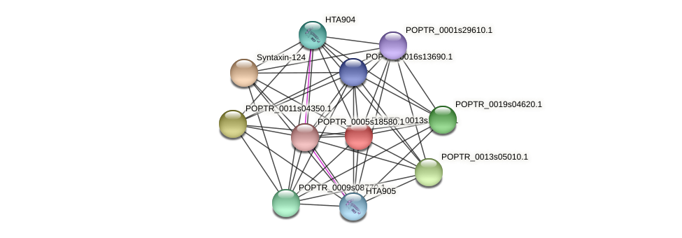 POPTR_0013s14360.1 protein (Populus trichocarpa) - STRING interaction network