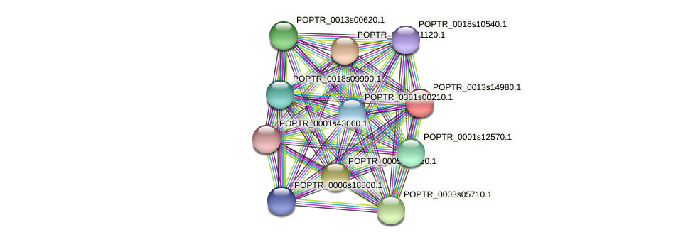 POPTR_0013s14980.1 protein (Populus trichocarpa) - STRING interaction network