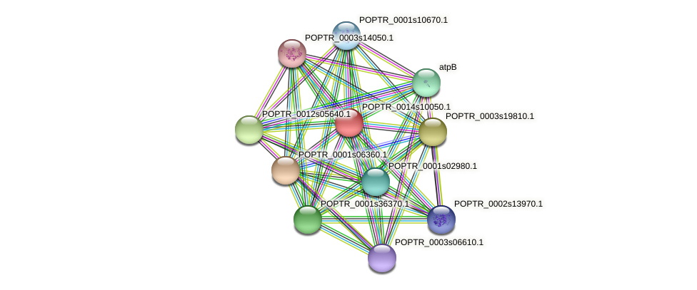 POPTR_0014s10050.1 protein (Populus trichocarpa) - STRING interaction network
