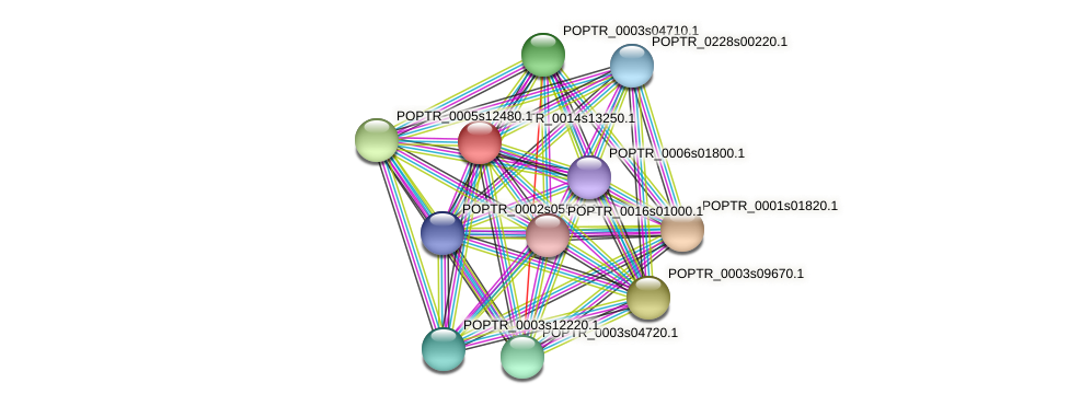 POPTR_0014s13250.1 protein (Populus trichocarpa) - STRING interaction network