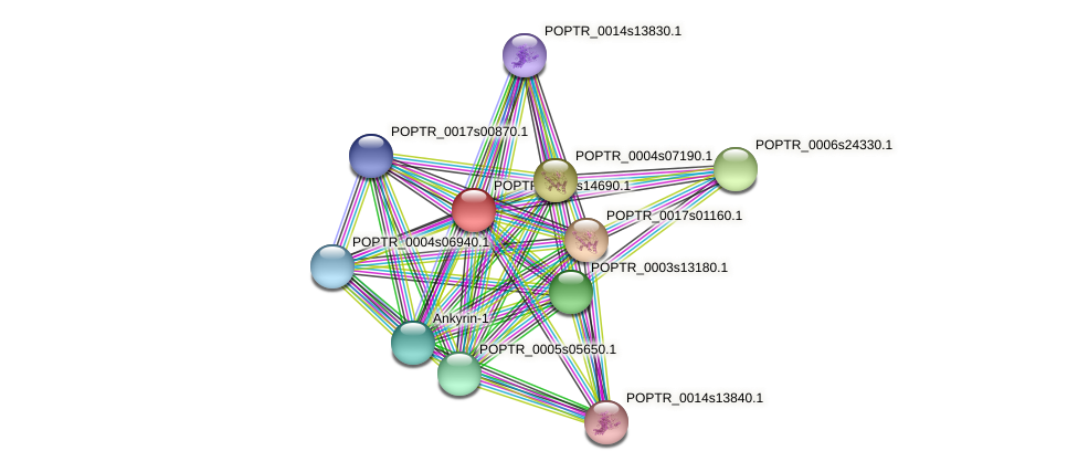 POPTR_0014s14690.1 protein (Populus trichocarpa) - STRING interaction network