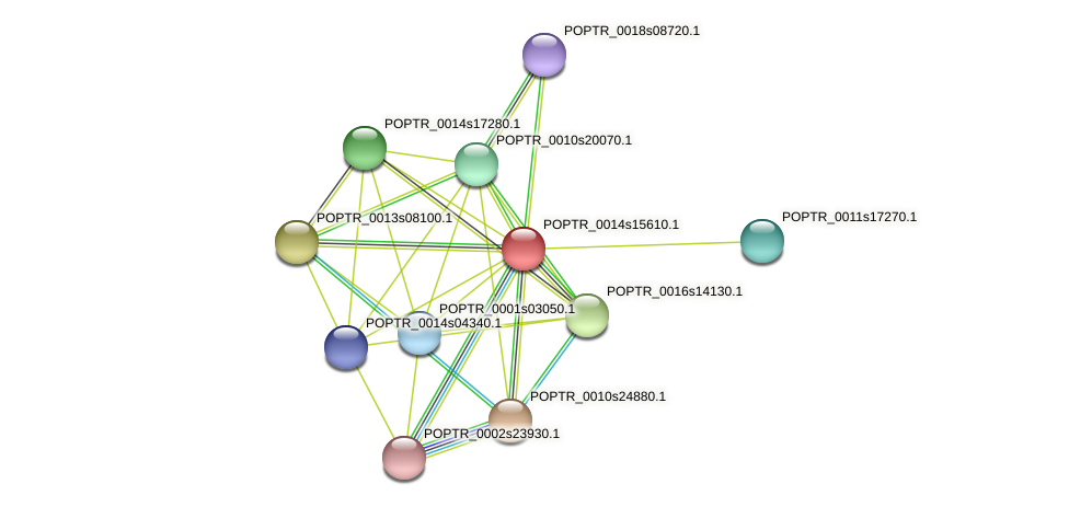 POPTR_0014s15610.1 protein (Populus trichocarpa) - STRING interaction network