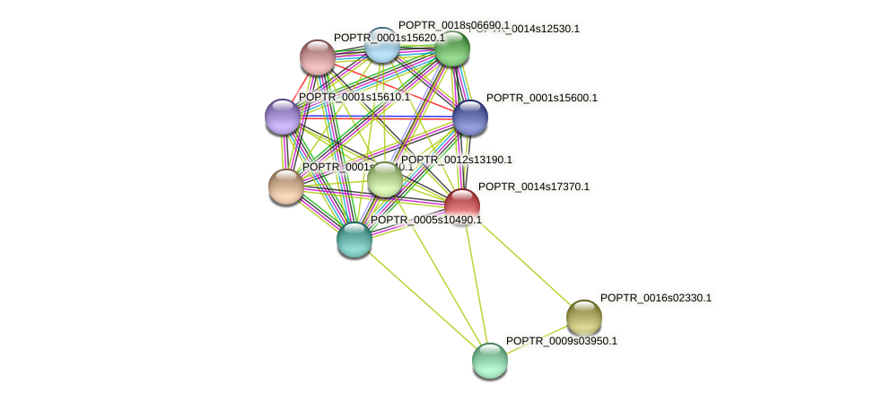 POPTR_0014s17370.1 protein (Populus trichocarpa) - STRING interaction network