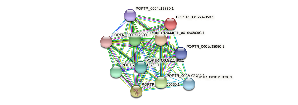 POPTR_0015s04050.1 protein (Populus trichocarpa) - STRING interaction network