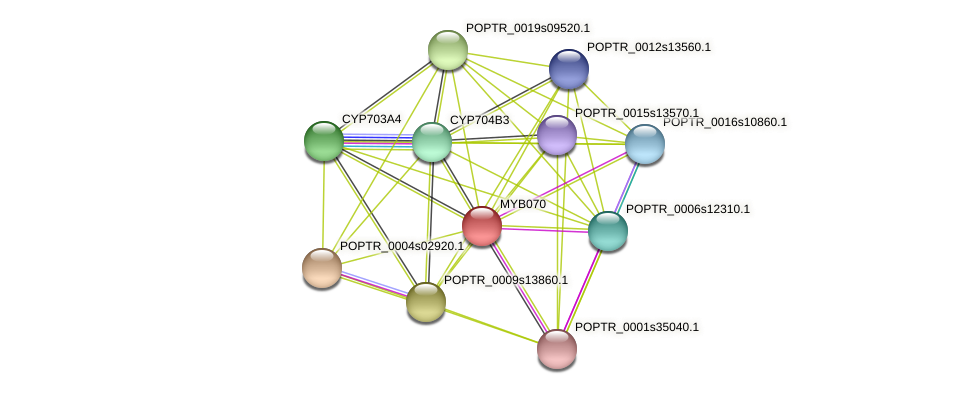 POPTR_0015s07900.1 protein (Populus trichocarpa) - STRING interaction network
