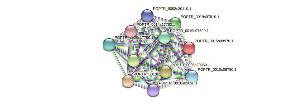 POPTR_0015s08970.1 protein (Populus trichocarpa) - STRING interaction network