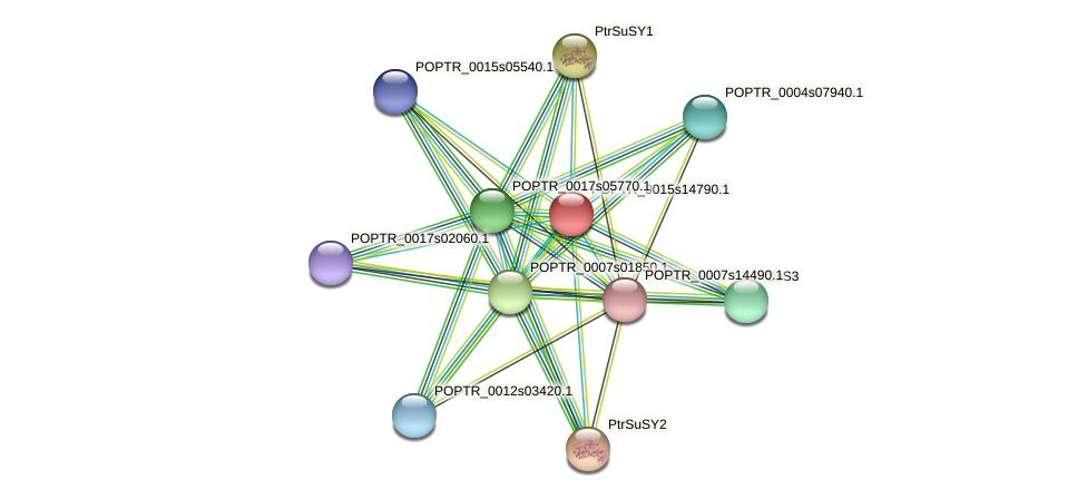POPTR_0015s14790.1 protein (Populus trichocarpa) - STRING interaction network