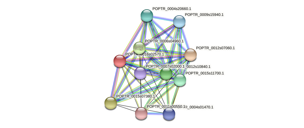 POPTR_0016s02570.1 protein (Populus trichocarpa) - STRING interaction network