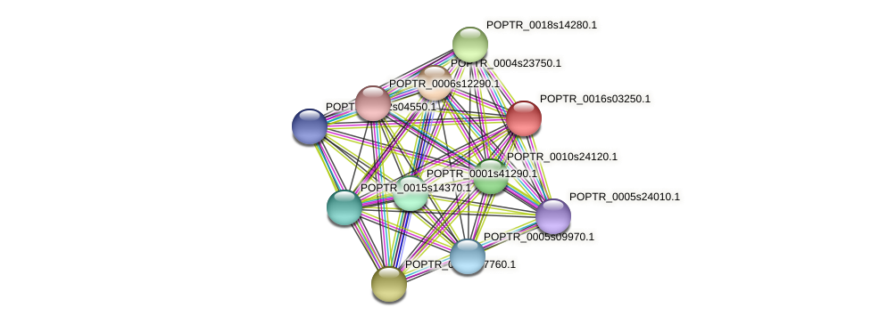 POPTR_0016s03250.1 protein (Populus trichocarpa) - STRING interaction network