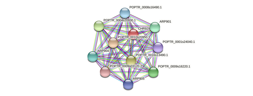 POPTR_0016s04280.1 protein (Populus trichocarpa) - STRING interaction network