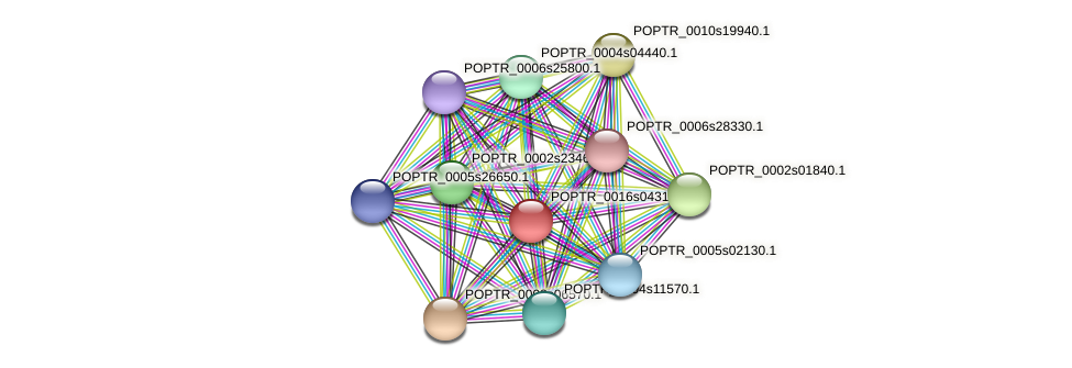 POPTR_0016s04310.1 protein (Populus trichocarpa) - STRING interaction network