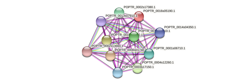 POPTR_0016s05190.1 protein (Populus trichocarpa) - STRING interaction network