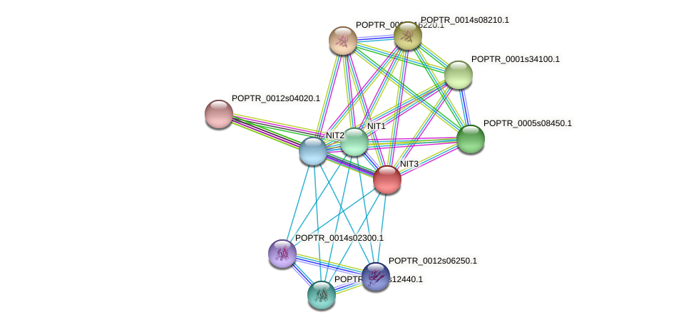 POPTR_0016s07510.1 protein (Populus trichocarpa) - STRING interaction network