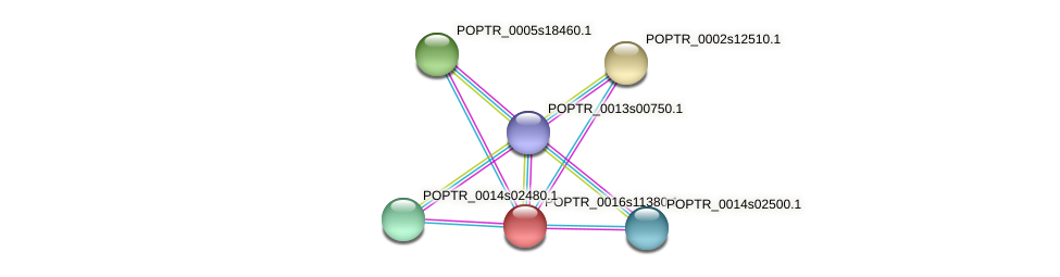 POPTR_0016s11380.1 protein (Populus trichocarpa) - STRING interaction network