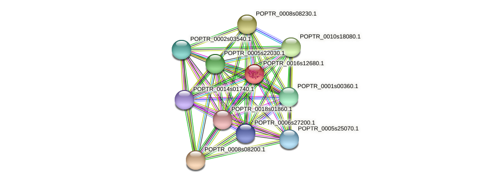 POPTR_0016s12680.1 protein (Populus trichocarpa) - STRING interaction network