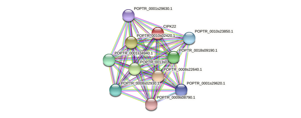 CIPK22 protein (Populus trichocarpa) - STRING interaction network