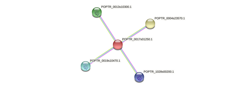 POPTR_0017s01250.1 protein (Populus trichocarpa) - STRING interaction network
