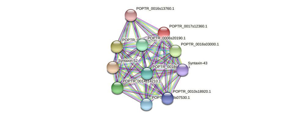 POPTR_0017s12360.1 protein (Populus trichocarpa) - STRING interaction network