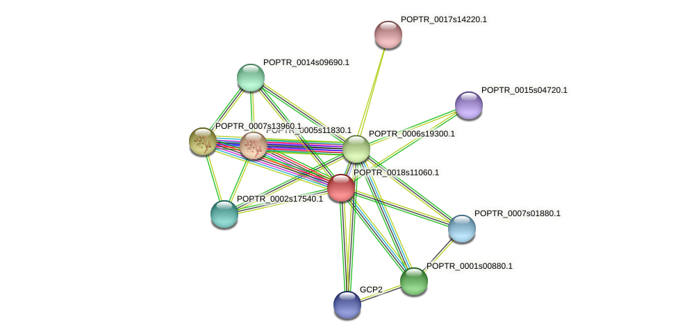POPTR_0018s11060.1 protein (Populus trichocarpa) - STRING interaction network