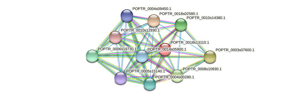 POPTR_0018s13110.1 protein (Populus trichocarpa) - STRING interaction network