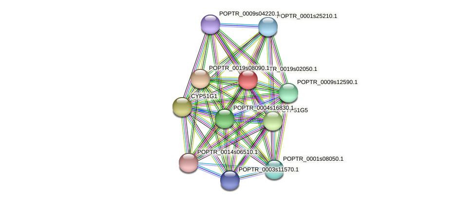 POPTR_0019s02050.1 protein (Populus trichocarpa) - STRING interaction network