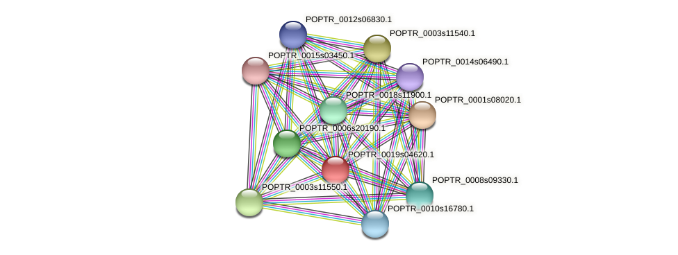 POPTR_0019s04620.1 protein (Populus trichocarpa) - STRING interaction network