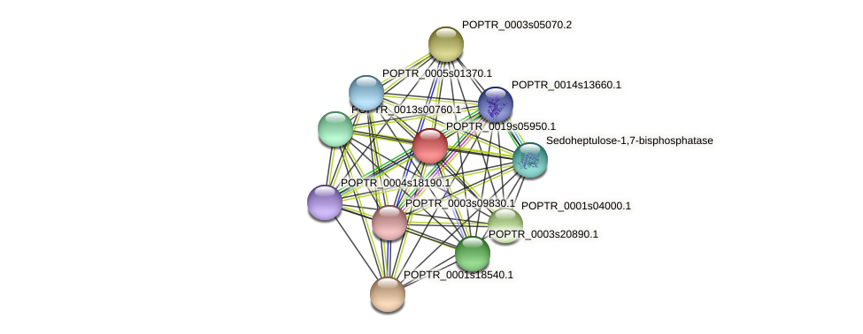 POPTR_0019s05950.1 protein (Populus trichocarpa) - STRING interaction network