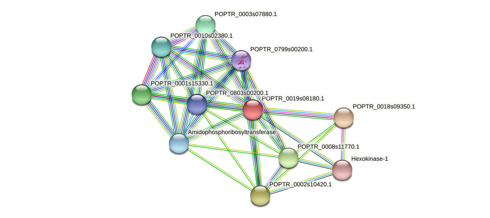 POPTR_0019s08180.1 protein (Populus trichocarpa) - STRING interaction network