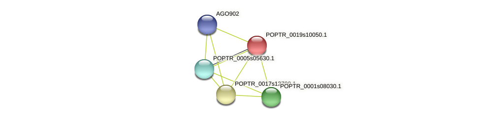 POPTR_0019s10050.1 protein (Populus trichocarpa) - STRING interaction network