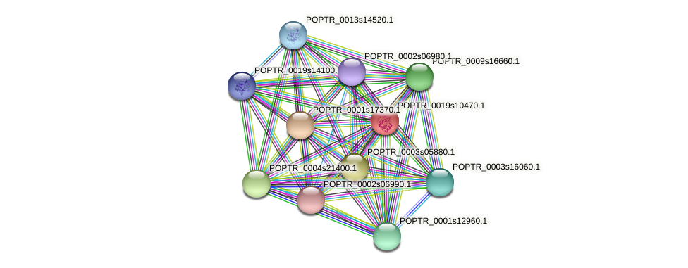 POPTR_0019s10470.1 protein (Populus trichocarpa) - STRING interaction network