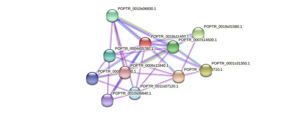 POPTR_0019s11460.1 protein (Populus trichocarpa) - STRING interaction network