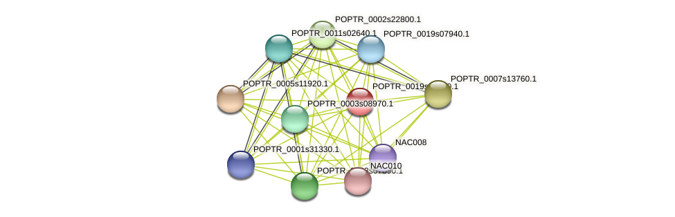 POPTR_0019s14670.1 protein (Populus trichocarpa) - STRING interaction network