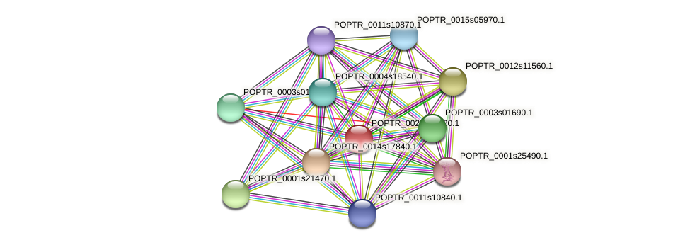 POPTR_0022s00620.1 protein (Populus trichocarpa) - STRING interaction network