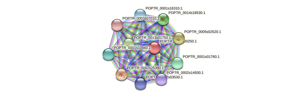 POPTR_0097s00250.1 protein (Populus trichocarpa) - STRING interaction network