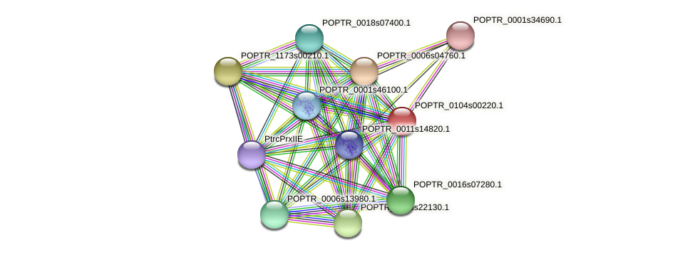 POPTR_0104s00220.1 protein (Populus trichocarpa) - STRING interaction network
