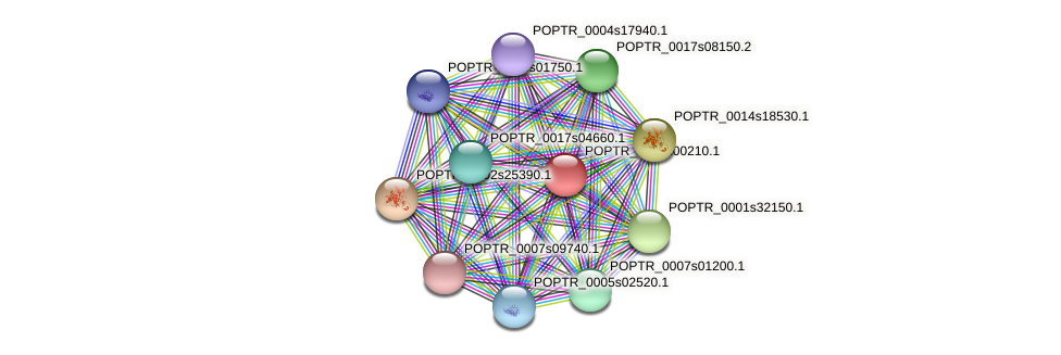 POPTR_0130s00210.1 protein (Populus trichocarpa) - STRING interaction network